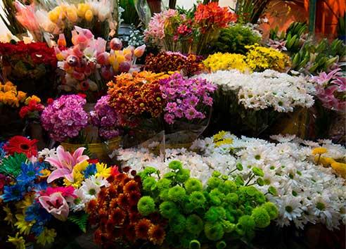 Diferentes tipo de plantas y flores