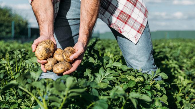 insumos para agricultura orgánica