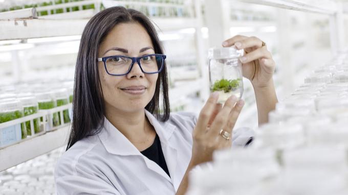 Mujer, biotecnologa. Muestra de plantas en un tubo de ensayo.