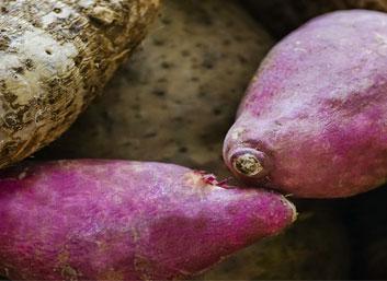 Tubérculos y raíces de Costa Rica